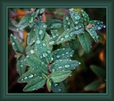 Raindrops by LynEve, photography->nature gallery