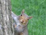 Curious Squirrel by orangejulius, Photography->Animals gallery