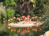 Flamingo Island by minicoopermellie, Photography->Birds gallery