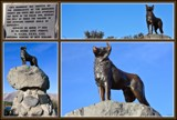The sheepdog memorial, Lake Tekapo by LynEve, photography->sculpture gallery