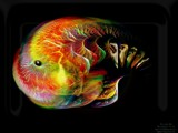 The Jelly Fish Fractal by MrXwild, Computer->3D gallery
