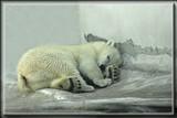 Siku by Jimbobedsel, photography->animals gallery