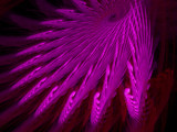 Enter the Vortex by yellowdog07, Abstract->Fractal gallery