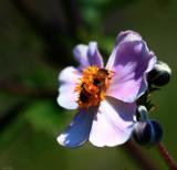 Bzzzzzzzzzzzzzzzz by tigger3, photography->insects/spiders gallery