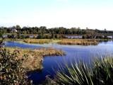 Magnolia Plantation: Ashley River 2 by Flurije, Photography->Landscape gallery