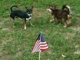 """Have A Great 4th."" by muki7, photography->pets gallery"