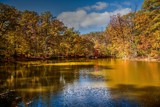 Autum in Lindenwood by tigger3, photography->landscape gallery