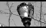 Central Park Lamp by TrevorMorgan, Photography->Still life gallery