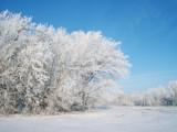 December Frost by jeremy_depew, Photography->Landscape gallery