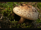 Got ya! by ekowalska, Photography->Mushrooms gallery