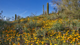 the desert in bloom by jeenie11, Photography->Flowers gallery