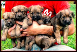 Paul's Pups by ccmerino, photography->pets gallery