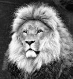 The King by Ramad, contests->b/w challenge gallery