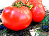 Tomato Party! by marilynjane, Photography->Food/Drink gallery