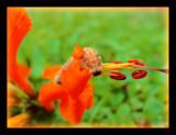 Orangepillar by dmk, Photography->Macro gallery
