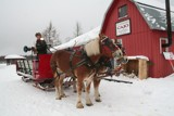 Canadian Sleigh Ride by judgepaul, Photography->Nature gallery