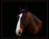 THOROUGHBRED by LANJOCKEY, Photography->Animals gallery