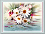 Strawflowers . . by LynEve, Photography->Manipulation gallery