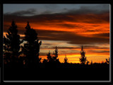Pines Silhouette by LynEve, Photography->Sunset/Rise gallery
