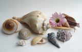 Shells by jerseygurl, photography->still life gallery