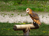 Whooooo by dwdharvey, Photography->Birds gallery