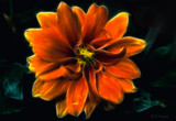 Flaming Flower by slybri, Photography->Manipulation gallery
