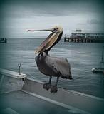 Yawnnnnnnnnnnnnnnn!! by Flmngseabass, photography->birds gallery