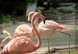 Florentino by Jimbobedsel, Photography->Birds gallery