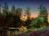 Chroma Woods by Zyrogerg, Photography->Manipulation gallery