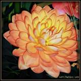Birthday Wish by trixxie17, photography->flowers gallery