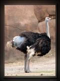 Animal Crackers XXXVI by Hottrockin, Photography->Birds gallery