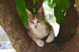 Just a greek cat by joypie, photography->animals gallery
