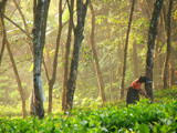 Early working bird by priyanthab, photography->people gallery
