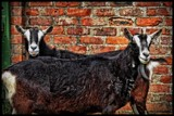 Push Me, Pull Me.. by Dunstickin, photography->animals gallery