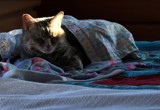 Comforts Of Home-Miss Bella by tigger3, photography->pets gallery