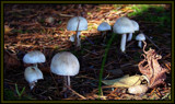 Just a little fungus... by ironjoe, Photography->Mushrooms gallery