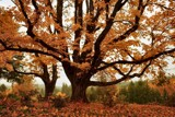 Seating Under the Oak Tree by verenabloo, Photography->Landscape gallery