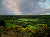 Gorse by LANJOCKEY, Photography->Landscape gallery