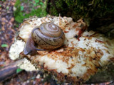 The snail on the shelf by Pistos, photography->nature gallery