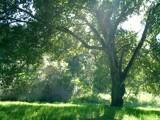 Oak Meadow by trisweb, photography->landscape gallery