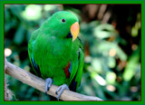 The green guy by Emmie9, Photography->Birds gallery