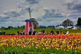 Tulip Festival by gr8fulted, photography->flowers gallery