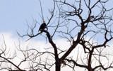 Dah Dah Di Dah by 0930_23, photography->birds gallery