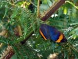 Blue Beauty by wheedance, Photography->Butterflies gallery