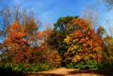 Color's Of Autumn by tigger3, photography->landscape gallery
