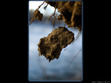 Hanging By a Thread by d_spin_9, Photography->Macro gallery