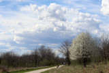 Early Spring Walk by Pistos, photography->nature gallery