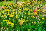 Yellows! And Reds! And Greens! Oh. My! by gr8fulted, photography->flowers gallery