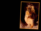 Squirrel by jeffpratt, Photography->Animals gallery