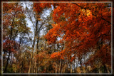 Bright Colors Of Fall by Jimbobedsel, photography->nature gallery